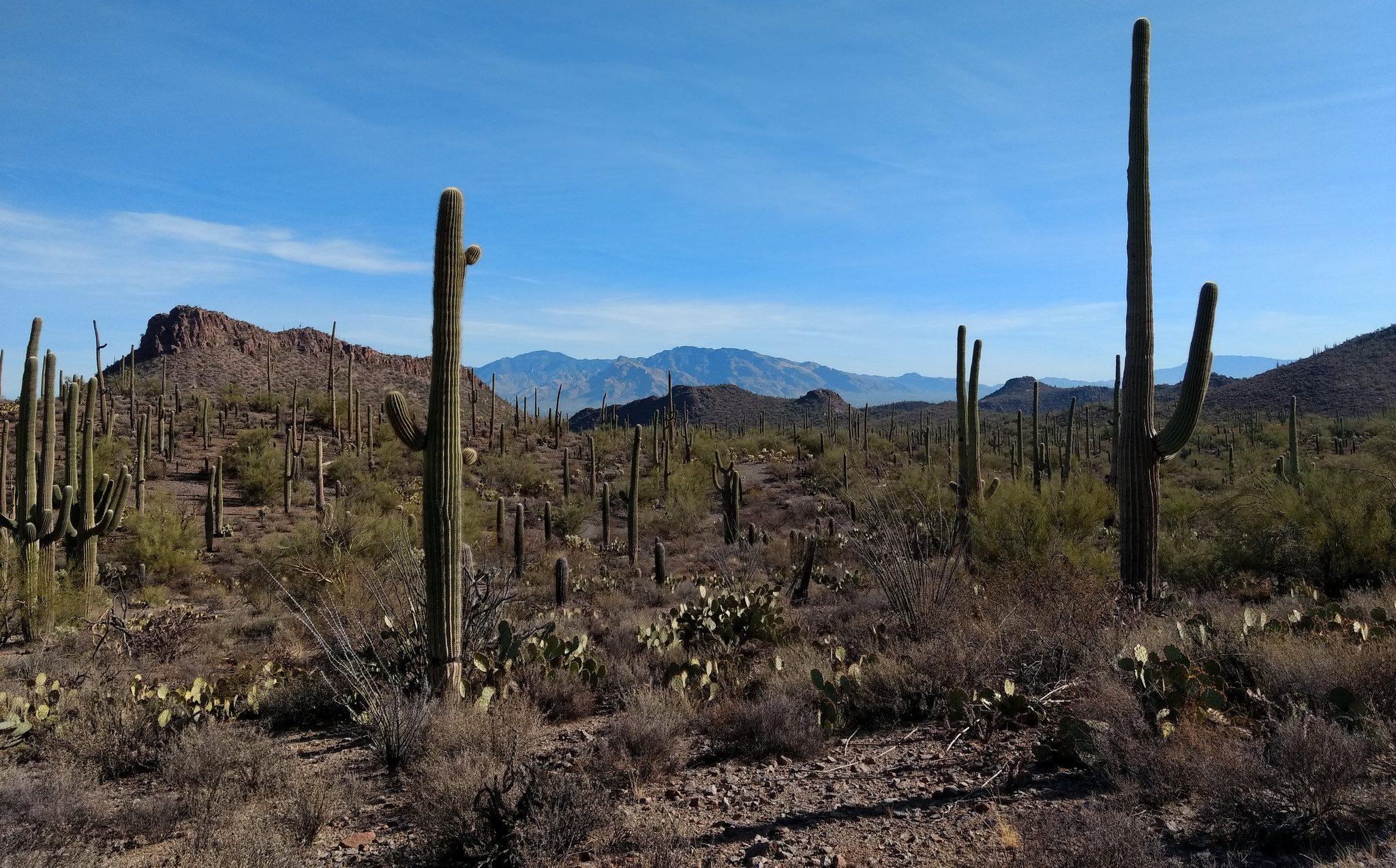 Tootin' Tucson